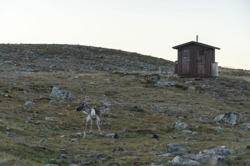 Reindeers morning routine