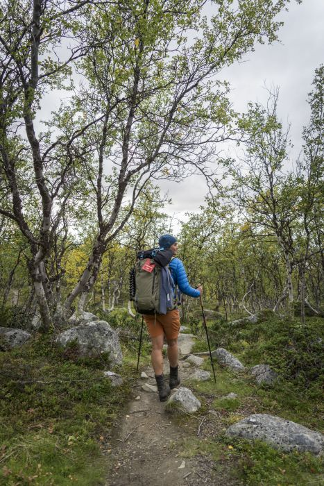 Reaching the woods of Kilpisjarvi